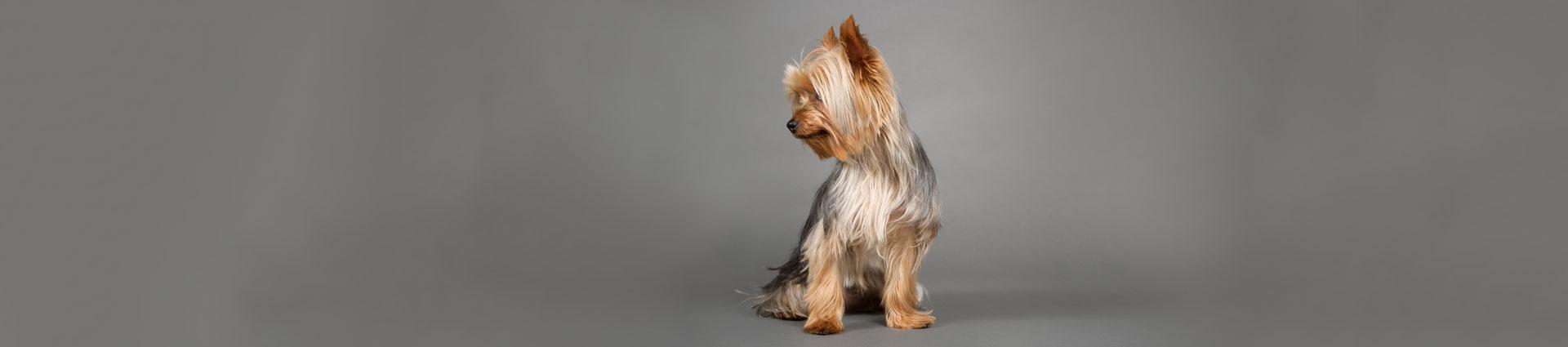 1920x400_CanineSpa_FNL