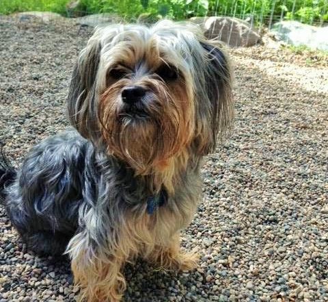 Tail Wagger of the Month: Coco