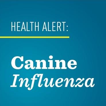 The Canine Influenza Virus