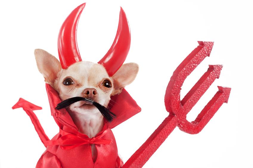 Devilish Dog