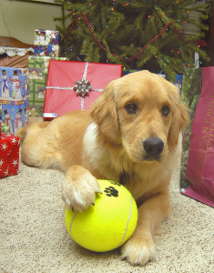 dog with presents