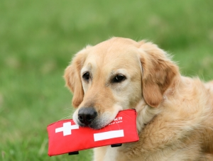 dog carrying first aid kit