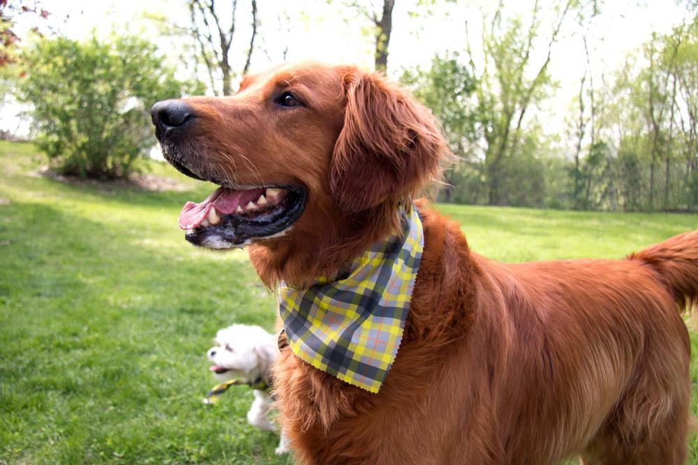 Smiling Dog At Dog Park