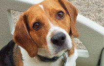 Beauregard - Tail Wagger Of The Month