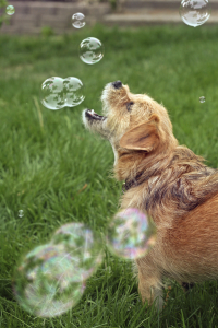 dog playing with bubbles
