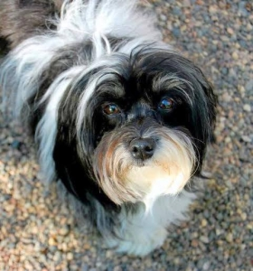 Wagging Tails Tail Wagger August 2015 - Frankie
