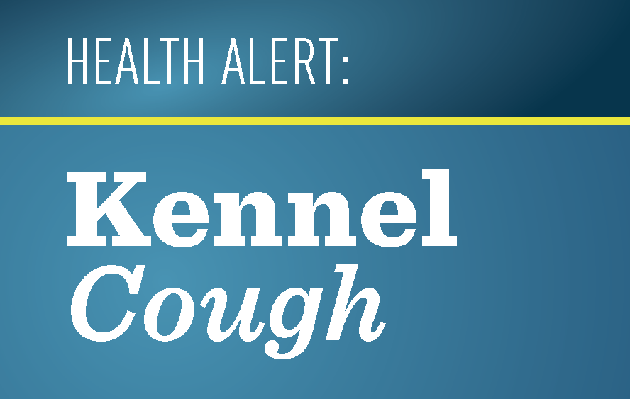 Wagging Tails Pet Resort Health Alert Kennel Cough