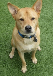 Wagging Tails Pet Resort Tail Wagger of the Month Flash