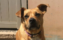 Maggie Wagging Tails Pet Resort Tail Wagger Of The Month
