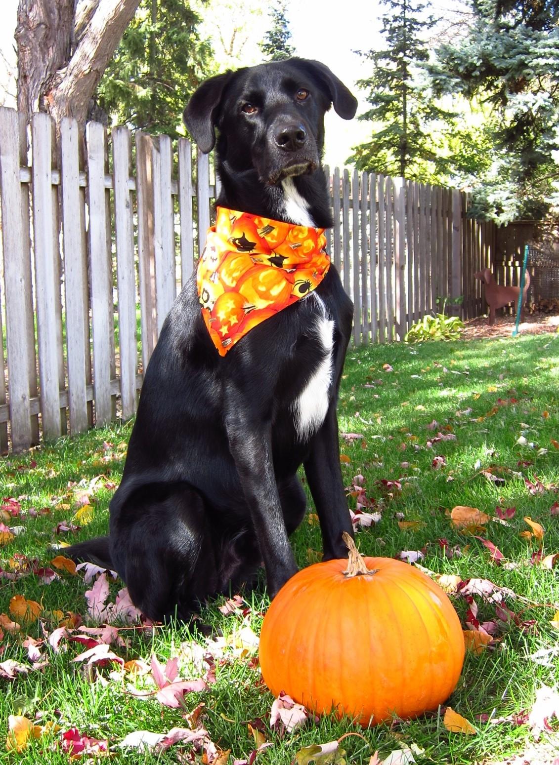 Black Dog Rescue Stanley