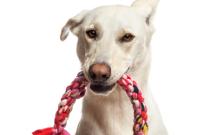Dog Holding Toy Braid