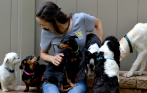 Wagging Tails Staff With Dogs Thumbnail