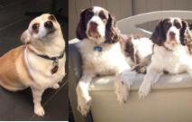 Duke, Beau, And Bella Thumbnail