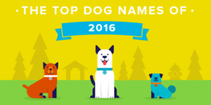 Rover.com Top Dog Names