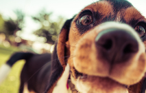 Dog Face Thumbnail