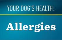 Dog Allergies Thumbnail