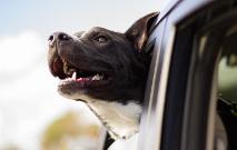 Smiling Dog Thumbnail