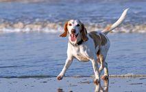 Dog At Beach Thumbnail