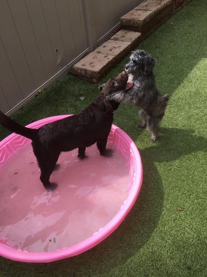 Dog In Kiddie Pool