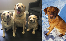 Maggie-Willow-Freckles-Elwood Tail Wagger Thumbnail