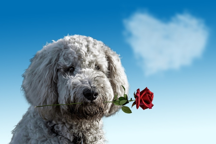 dog with rose in its mouth