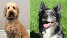 Rusty And Babe July Tail Waggers 2018 Thumbnail