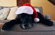 Christmas Dog Thumbnail