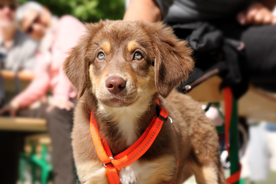 Dog in orange harness