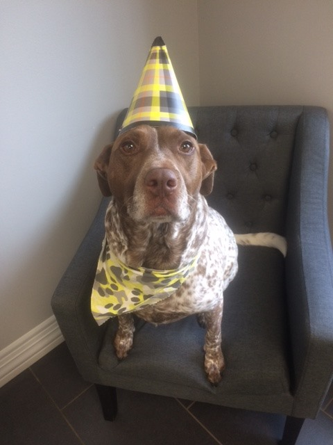 dog wearing birthday hat
